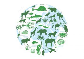 Биоразнообразие это в экологии